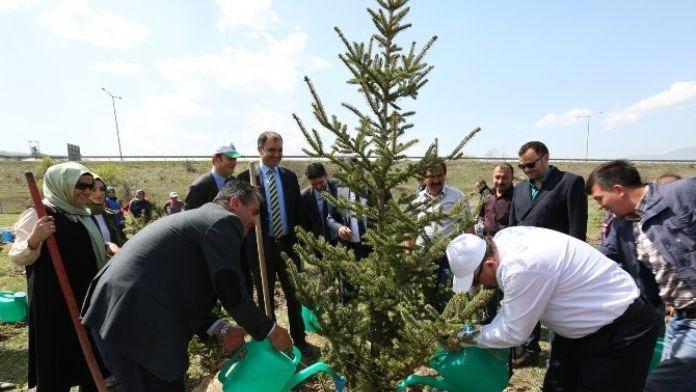 Bolu Belediye Başkanı Yılmaz Şehit Uzman Çavuş İçin Fidan Dikti