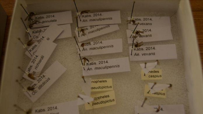 Sivrisinekle mücadelede İHA kullanılacak
