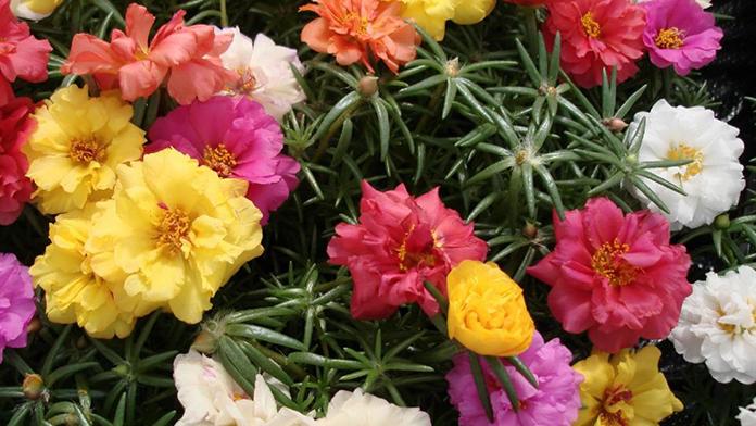 Baharın Gelmesiyle Çiçek Satışları Patladı