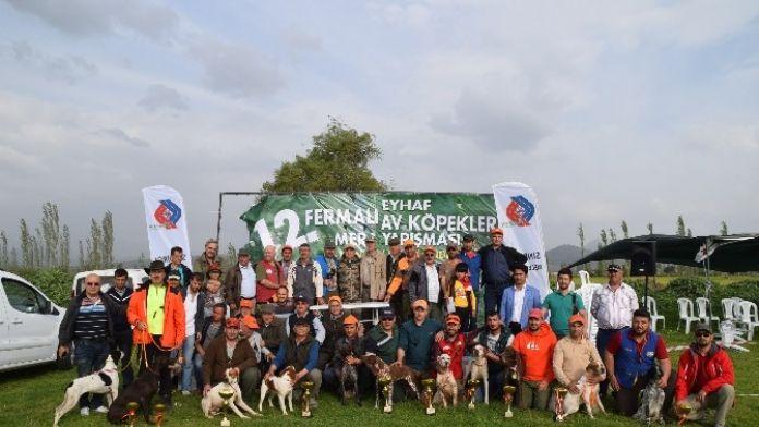 Balıkesir'de Av Köpekleri Yarıştı