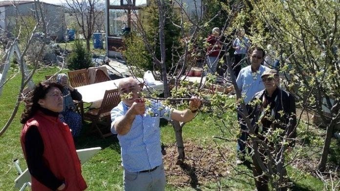 Tepebaşı'nda Meyve Ağaçları Ve Üzüm Bağları Budandı
