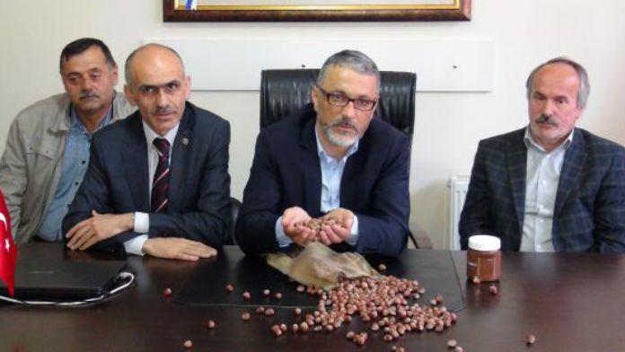 Giresun Ziraat Odaları: Fındık üreticisi kan ağlıyor