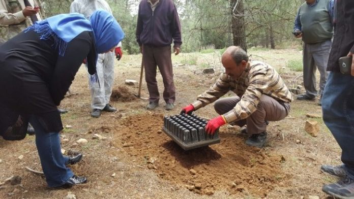 Korkuteli Ormanlarına Terminatör Böcekler Salındı