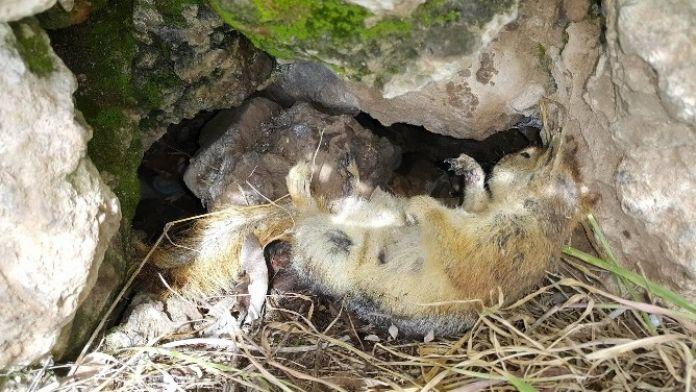 Ölü Gibi Uyuyan Sincap Objektiflere Yakalandı
