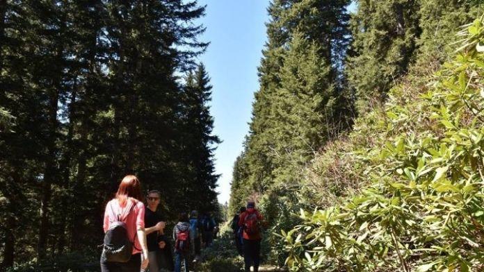 Çambaşı Yaylası'nda Doğa Yürüyüşü