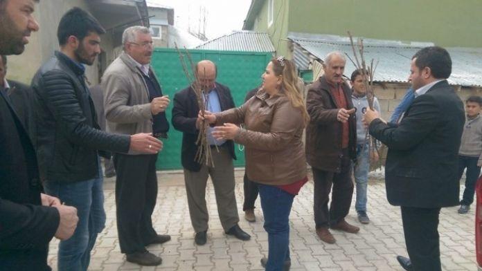 İpekyolu Belediyesi'nden 750 Aileye Üzüm Fidesi