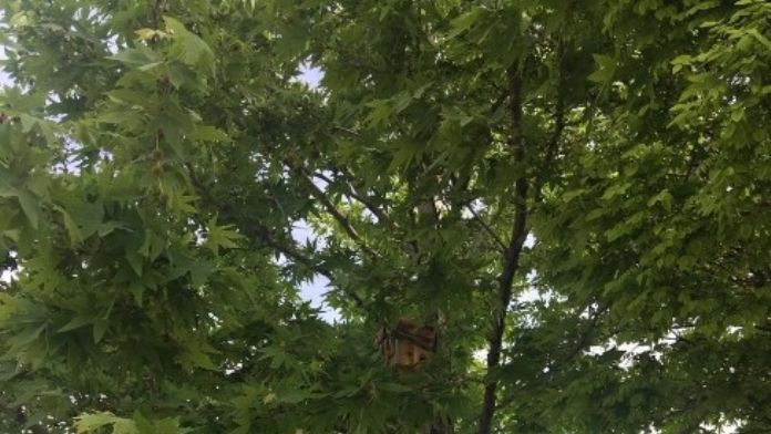 Akçadağ'da Parklara Kedi Ve Kuş Evleri Yerleştiriliyor