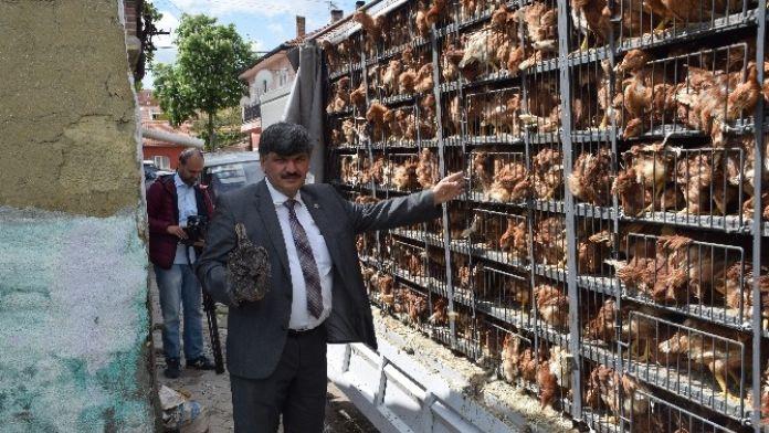 Tepebaşı Ziraat Odası'ndan 'Tavuk Şenliği'