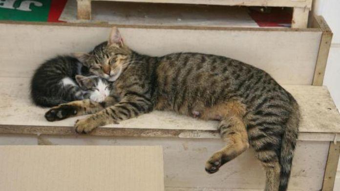 Anne ve yavru kedi böyle uyudu