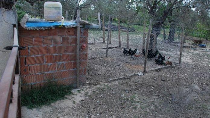 Çuvalla 200 Tavuk Çalındı