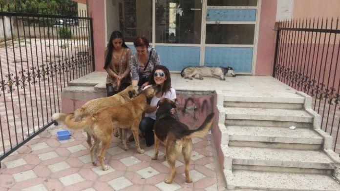 Karaca'dan 'Sokak Hayvanları İçin Su Bırakın' Çağrısı
