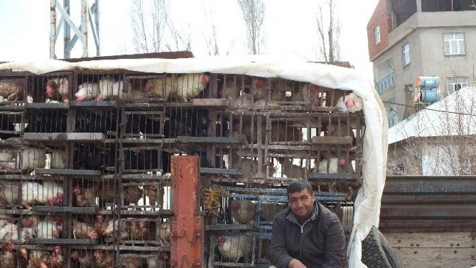 Malazgirt'te Tavuk Satışları Başladı