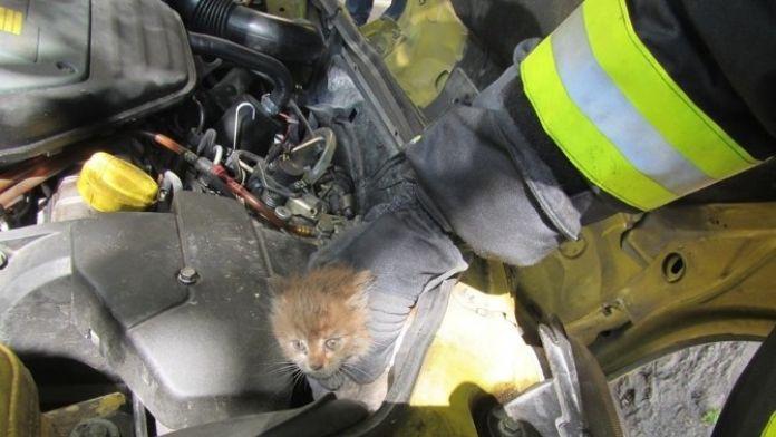 Otomobilin Motor Kısmına Sıkışan Kediyi İtfaiye Kurtardı