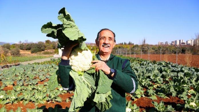 Mezitli Belediyesi 'Doğal Tohumlar' Üretiyor