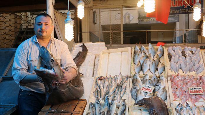 Mersin'de pamuk cinsi köpek balığı yakalandı
