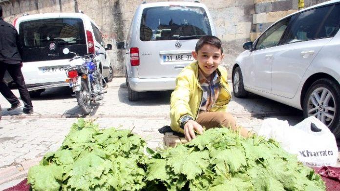 Kilis'te Asma Yaprağı Piyasaya Çıktı
