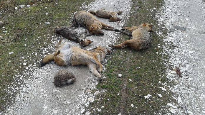 Bursa'da hayvan ölümlerinde şaşırtan rapor