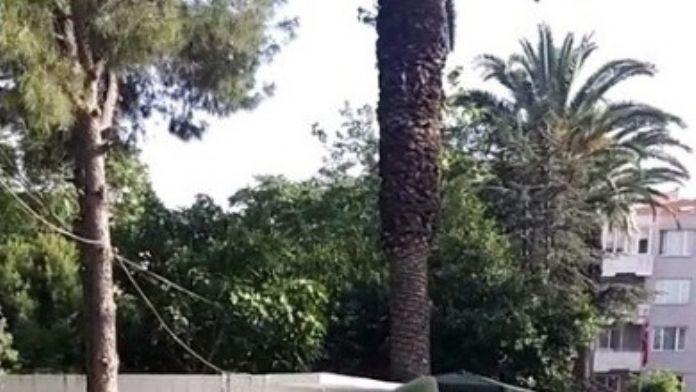 6 Yıllık Cinayeti Jandarma Aydınlattı
