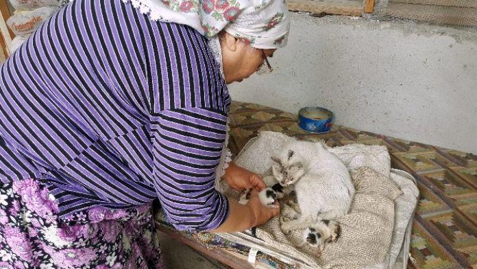Yapışık Üçüz Kedi Yavruları Yardım Bekliyor