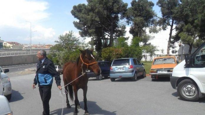 Gebze'de Başı Boş AT Operasyonu