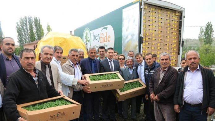 Büyükşehir'den Çiftçiye Sebze Fidesi Desteği