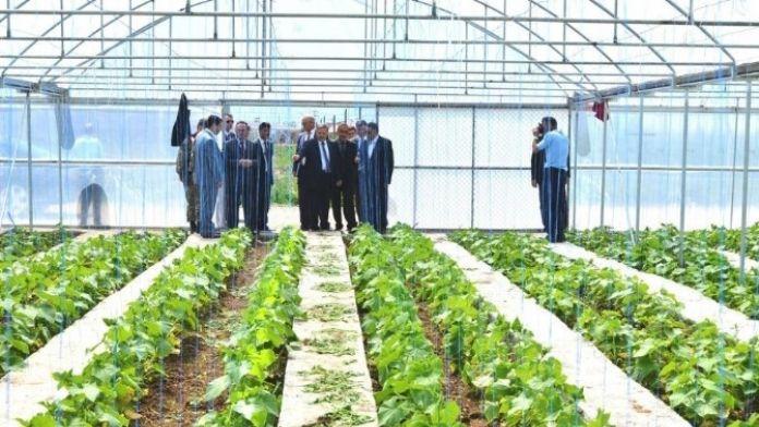 Hükümlüler Meyve Ve Sebze Üretiyor