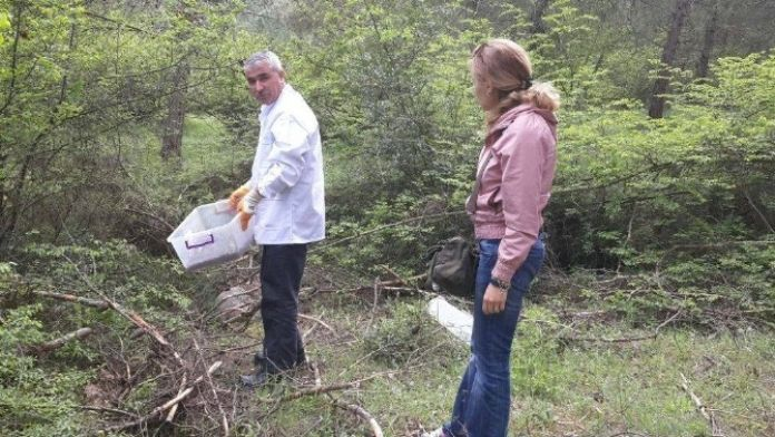 Ormanları Yırtıcı Böcekler Koruyor