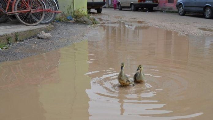 Göle Dönen Cadde Ördeklere Kaldı