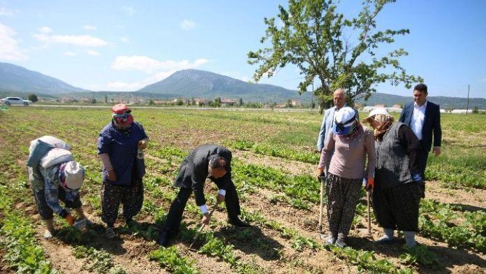 Özaltun, Kadın İşçilerle Pancar Çapası Yaptı