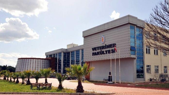 ADÜ Veteriner Fakültesi'nin Eğitim Kalitesine AB Tescili