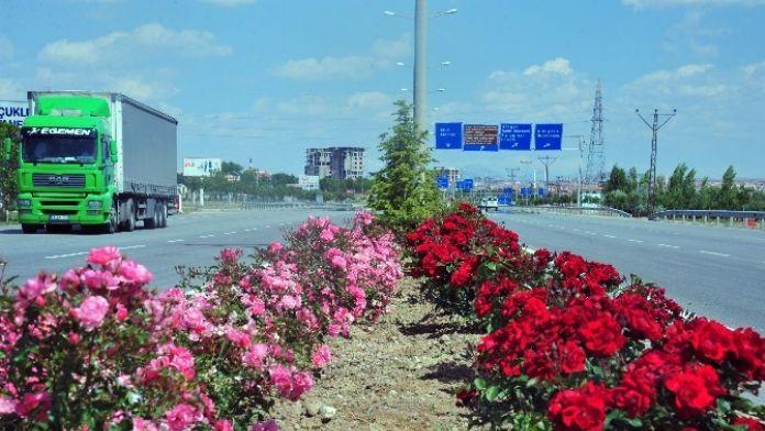 Karaman'da Şehir Girişleri Çiçek Gibi