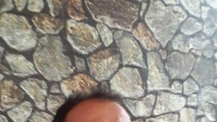 Ülkü Ocakları Başkanı Karaca'dan O Profesöre Sert Tepki