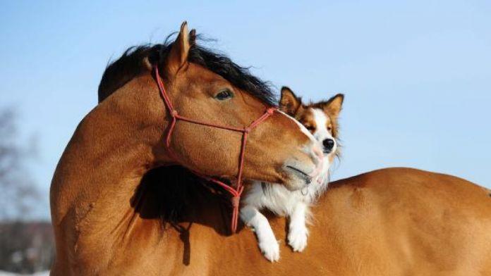 Hepsiburada.com'dan sokak hayvanlarına mama bağışı kampanyası