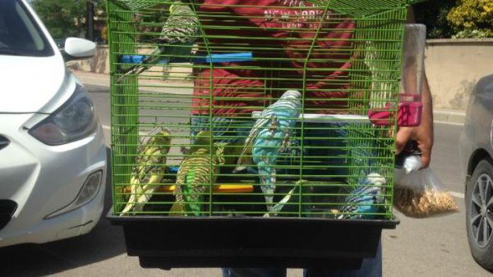 Okulları soyan hırsızlar kuşları da çaldı