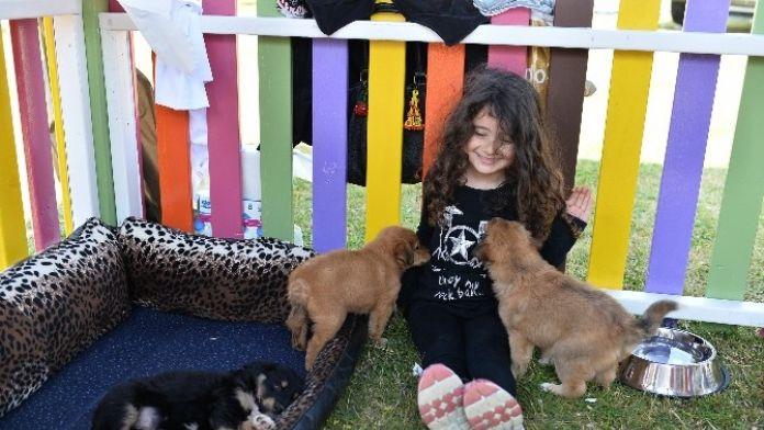 Muratpaşa'da Sokak Hayvanları Sahiplendirme Festivali
