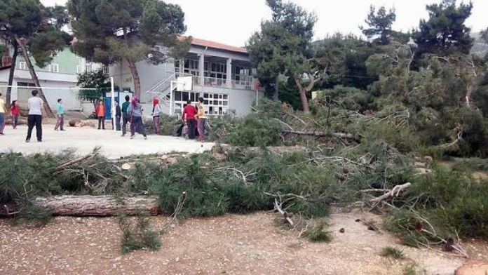 İmam Hatip Ortaokulu İçin 20 Çam Ağacı Kesildi Büyük Tepki Yağdı