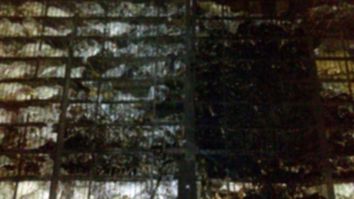 TIR yandı, 8 bin tavuk telef oldu