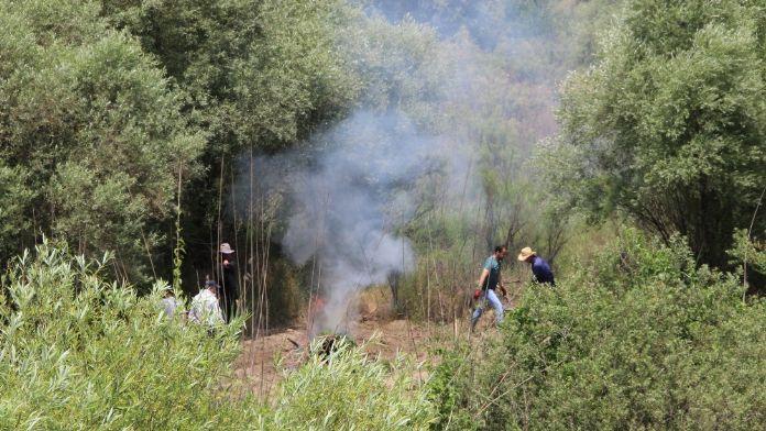 Hevsel Bahçeleri'nde 50 bin kök Hint keneviri