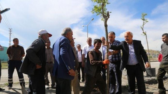 Tuşba Belediyesi'nden Ağaçlandırma Çalışmaları