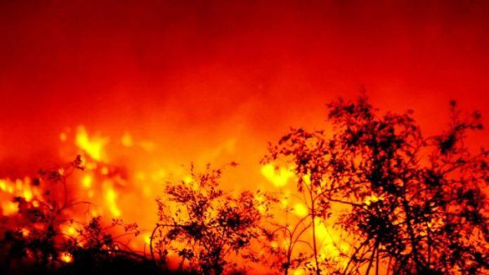 Bodrum'da 10 hektar tarım arazisi yangında zarar gördü