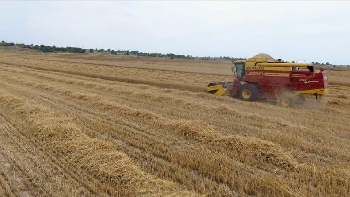 Trakya'da buğday hasadı başladı