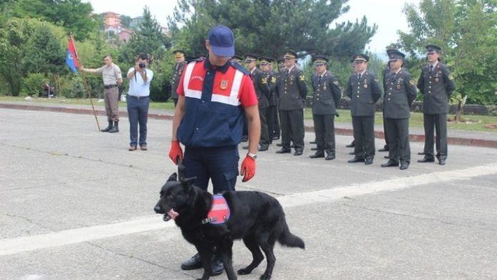 Narkotik Köpeği 'Dalga' Gösteriye Damga Vurdu