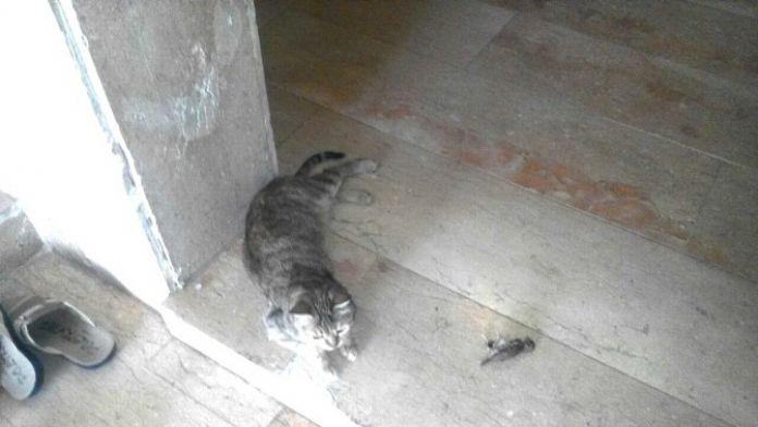 Kedi, Ölen Kuşun Yanından Ayrılmadı