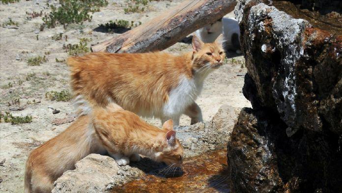 Sıcak havada sokak hayvanları da unutulmadı