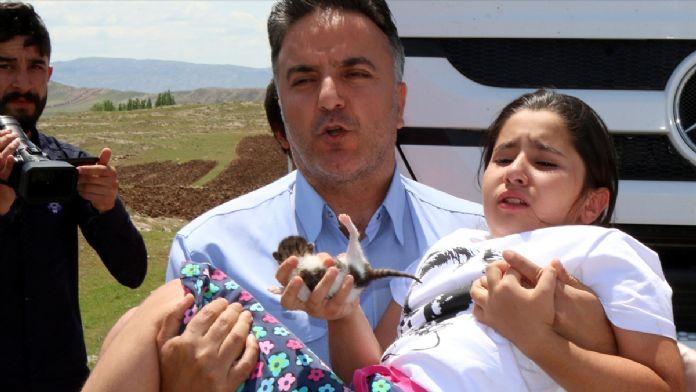 Sivas'ta hafif ticari araç devrildi: 5 yaralı