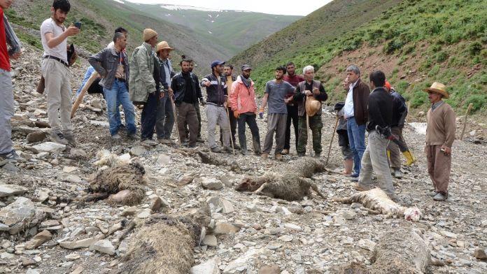 Hakkari'de sel: 800 hayvan telef oldu