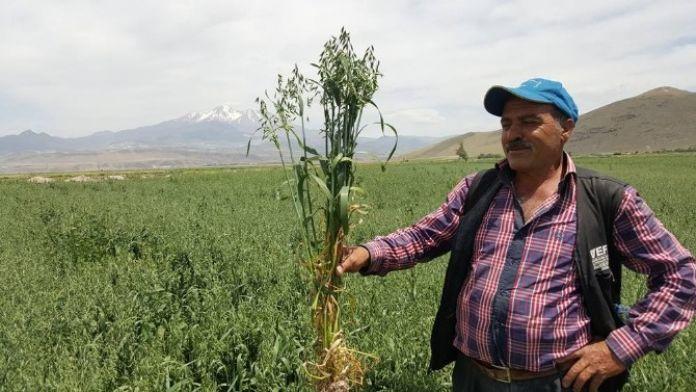 Kayseri Şeker'den Yulaf, Danelik Mısır Ve Tohumluk Arpa Ekimine Destek