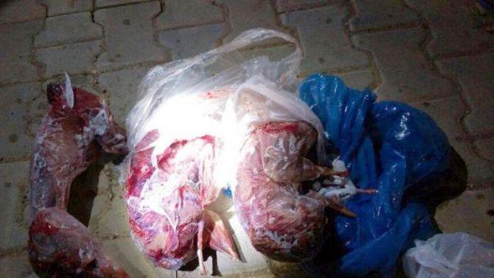 Vurdukları tavşanlarla yakalanınca 'ev tavşanı' dediler