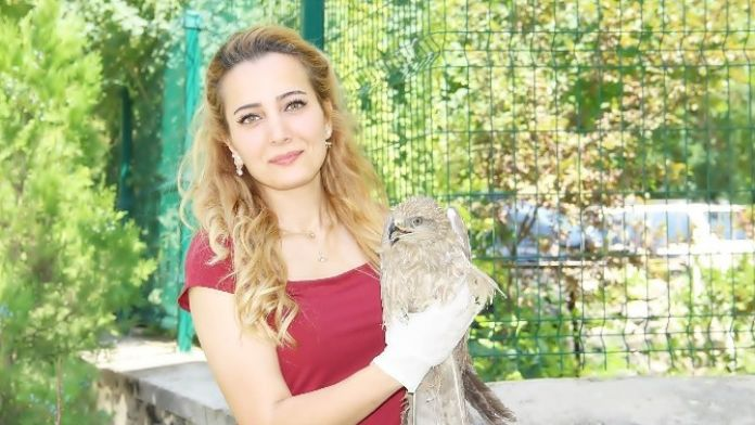 Çemişgezek'te Bulunan Hasta Şahin Tedavi Altına Alındı