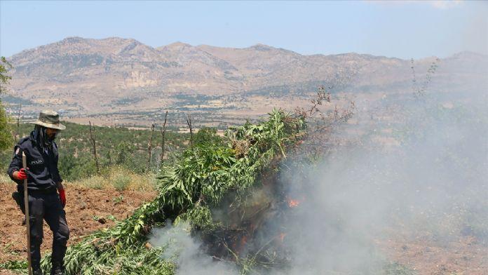 PKK'nın finans kaynağı 'kenevir tarlaları'na operasyon